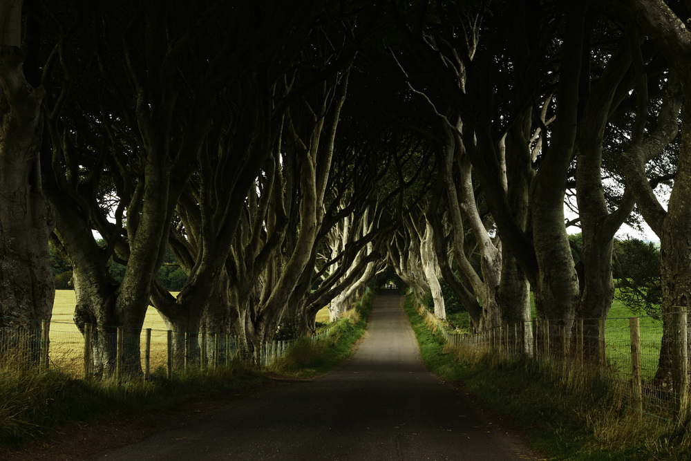 The Dark Hedges4